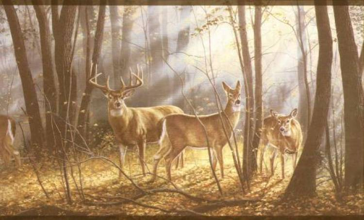 Forest and Wildlife Resources I Notes