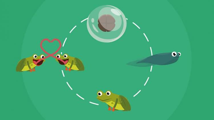 How Do Organisms Reproduce? | Revision Notes